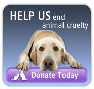 ASPCA - Pet Behaviorist