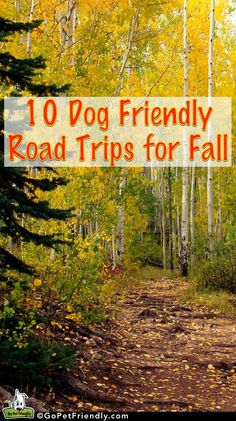 GoPetFriendly.com's 10 Dog Friendly Road Trips for Fall | Take Paws - The official pet travel blog of http://GoPetFriendly.com