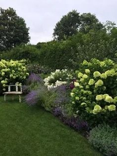 hydrangea-border-landscape-traditional-with-cottage-landscape-traditional-plante. - hydrangea-border-landscape-traditional-with-cottage-landscape-traditional-planter-boxes. Landscape Borders, Garden Borders, Forest Landscape, Landscape Design, Hydrangea Potted, Hydrangea Paniculata, Hydrangeas, Outdoor Flowers, Outdoor Pots