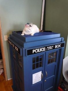 TARDIS cat house! WOAH! I would totally spoil my cats with this!