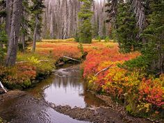 Three Sisters Wilderness, Oregon