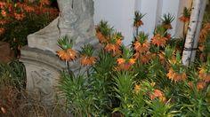 Dresdner Frühling im Palais Großer Garten 2012: eine bezaubernde Zeitreise durch die Gartenbaukunst. Foto: Volkmar Richter http://garten2null.de/2012/03/26/dresdner-fruehling-im-palais-grosser-garten-2012