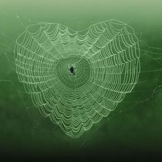 ~Spider web heart~ Nature is trying to tell us. heart each other. Let's forgive & forget and the world will be a better place for all ♡ Heart In Nature, Heart Art, I Love Heart, Happy Heart, Heart Pics, Heart Pictures, Photo Heart, Love Symbols, Love Photography