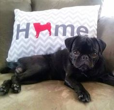 Home Pug Pillow - offered in 50+ dog breeds and multiple colors