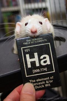 Science rats