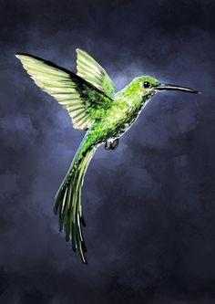 Green Hummingbird Art Print