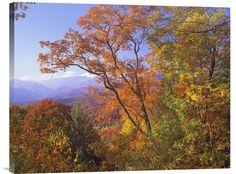 Great Smoky Mountains from Blue Ridge Parkway, North Carolina