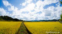 South Korea www.krystlescorner.com