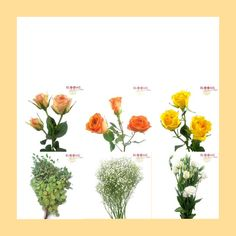 buds for centerpieces/baby breath for aisle basket