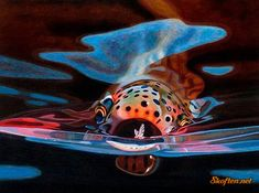 Trout! For more fly fishing info follow and subscribe www.theflyreelguide.com Also check out the original pinners/creators skoften.net site and support