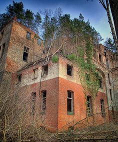 Trees grow from the roof on an abandoned building at the Beelitz-Heilstätte medical complex in Germany.