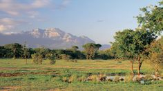 Vuyani Lodge: On the Moditlo Private Game Reserve, Vuyani has a prime spot for exploring the African bush.