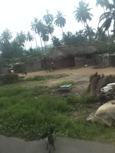 Small coastal village, Ghana. (Thought I would upload some photos from my trips to Ghana so as to give you guys an idea of the climate and topography of West Africa--AA)