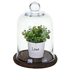 cloche 1 Glass Bell Jar, The Bell Jar, Glass Domes, Parisian Baby Showers, Cloche Decor, Brown Wood, Dark Wood, Dark Brown, Low Light Plants