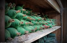 A colourful past: Haunting images of abandoned textile mill in Wales show wool still on the looms and stacks of yarn on shelves: Odd one out: A red yarn has somehow ended up among the green ones. Photographer Mr Circa said: 'It's the kind of stuff you would expect to see in a museum'