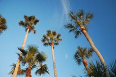 Penny-Pinching Tips for Visiting Florida's Palm Beaches Florida Coastline, Visit Florida, Palm Beach, Beaches, Tips, Plants, Travel, Viajes, Sands