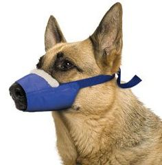 Four Flags Cozy Quick Muzzle Blue ** See this great image : Dog muzzle Dog Muzzle, Dog Shower, Dog Id Tags, Dog Diapers, Smiling Dogs, Dog Travel, Dog Barking, Dog Feeding, Dog Agility