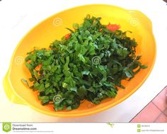 Green chicory in colored plate