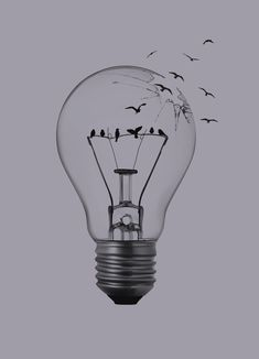 bulb drawing drawings pencil birds easy sketch sketches bird google freedom quotes