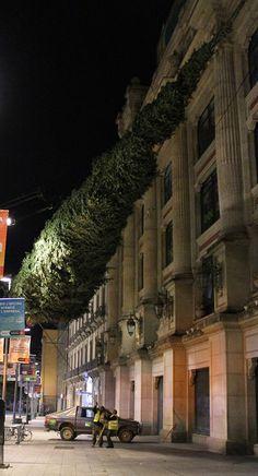 Oriol Bargalló: Fotografía - Flying tree