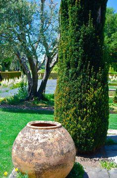 1000 images about pots on pinterest terracotta pottery - Paradise gardens roselle park nj ...