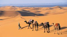 Moroccan Odyssey.  Eleven day journey from the seaside in Moracco to the Sahara.  Judd's dream vacation.