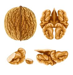 """WALNUT BRAIN FOOD """"Nothing could be more beautiful or poetic than when a healing food actually looks like the organ system it nourishes and heals in the body."""""""