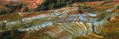 Panoramic of the terraces - I took this  panoramic of one of the most beautiful rice field terrace in Yunnan in early morning  I'm pleased also to announced I have won 6 awards in the One Eyeland international Contest 2014 for my work in China included :  Photographer of the Year - Nature  GOLD - Thierry Bornier