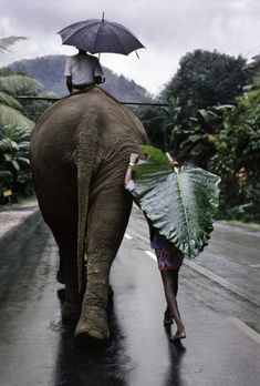 View A young farmer walks next to an elephant, Kandy, Sri Lanka by Steve McCurry at Sundaram Tagore Gallery in Hong Kong. Discover more artworks by Steve McCurry on Ocula now. Steve Mccurry, India Travel Guide, Travel Tips, Travel Tourism, Wanderlust, Adventure Is Out There, Oh The Places You'll Go, Belle Photo, Beautiful World