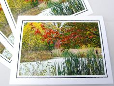 Photo Note Card Set  Set of Four Photo Cards  by PrettyByrdDesigns