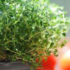 Αρωματικά φυτά στο μπαλκόνι μας! | WWF - Καλύτερη Ζωή