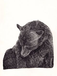 Jamie Mills bear drawing