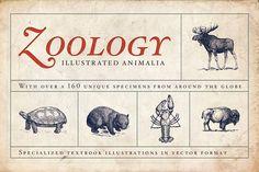 Zoology Animal Illustrations by BlackBird Foundry on @creativemarket