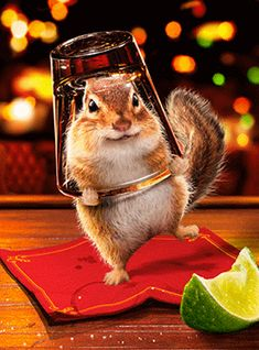 *Good to the last drop~~GIF Funny Happy Birthday Images, Funny Birthday Cards, Birthday Cheers, 22nd Birthday, Animals And Pets, Funny Animals, Cute Animals, Tierischer Humor, Happy Sunday Quotes
