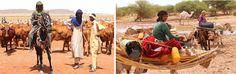 Spirit of America - Countering Extremism through Opportunity in Niger #SpiritofAmerica #SoA #Niger #CureSalee #veterinary