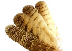 Brown Owl Feathers. Big Rounded Top Real Bird Feathers with Tan Colored Bands. Wide Stiff Shaft Quills for Smudging and Altars. Wing Feather
