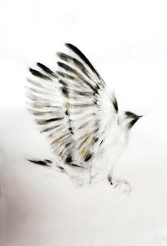 ARTFINDER: Outstretched Wings by Kellas Campbell - Ink and charcoal bird with touches of iridescent colour.