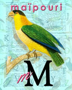 M for MAÏPOURI.Alphabet Ornithology art Decor par BerniesArtPrints