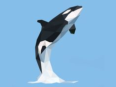 Killer Whale Low Poly