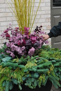 Creative & Practical winter container ideas with How To