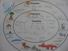 ecosystem, community, and population- concentric circle map- would divide into biotic and abiotic factors- could color code to reflect producers and consumers