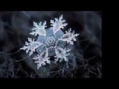 Snowflakes by Alexey Kljatov Snowflakes, Dandelion, Winter, Flowers, Youtube, Plants, Education, Musica, Winter Time