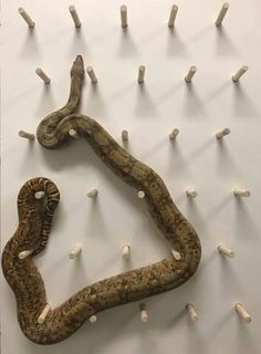 - My list of the most beautiful animals Cute Reptiles, Les Reptiles, Reptiles And Amphibians, Reptile Room, Reptile Cage, Beautiful Snakes, Most Beautiful Animals, Serpent Animal, Snake Cages