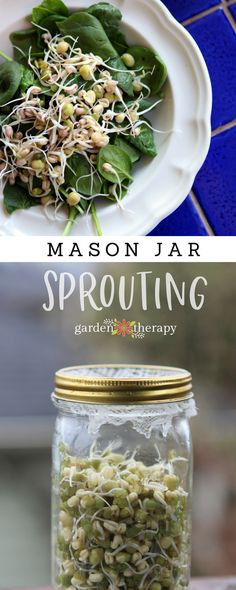 "Collage image of a salad with sprouts and a Mason jar full of sprouts with text ""Mason Jar Sprouting"""
