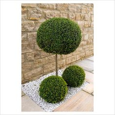 Buxus standard and balls in recess in the stone path with white gravel mulch in front of stone wall White Gravel, Planting, Gardening, Gravel Landscaping, Front Gardens, Buxus, Stone Path, Outdoor Spaces, Outdoor Decor