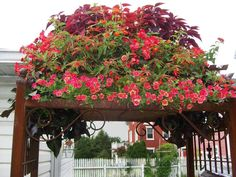 The top of this arbor boasts a beautiful bonnet of color, making for a grand garden entry.