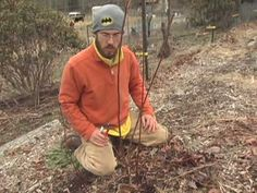 How to prune a young blueberry bush