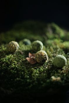 Candy Cap Moss Truffles: Mycelial Connections and Ancient Mosses — The Wondersmith Wild Edibles, Baking With Kids, Almond Recipes, Chocolate Truffles, Candy Recipes, Yummy Treats, A Food, Food Processor Recipes, Herbalism