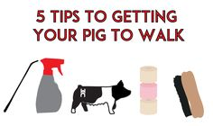 Having a hard time training your pig to walk? Here are 5 tips that can help you get your pig to strut its stuff!1. Brushing Hunting Jokes, Pig Hunting, Turkey Hunting, Hunting Cabin, Hunting Gifts, Archery Hunting, Womens Hunting Clothes, Women Hunting, Hunting Photography