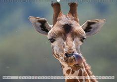Mein Kalender des Tages:   Emotionale Momente: Afrika Wildlife Part 2